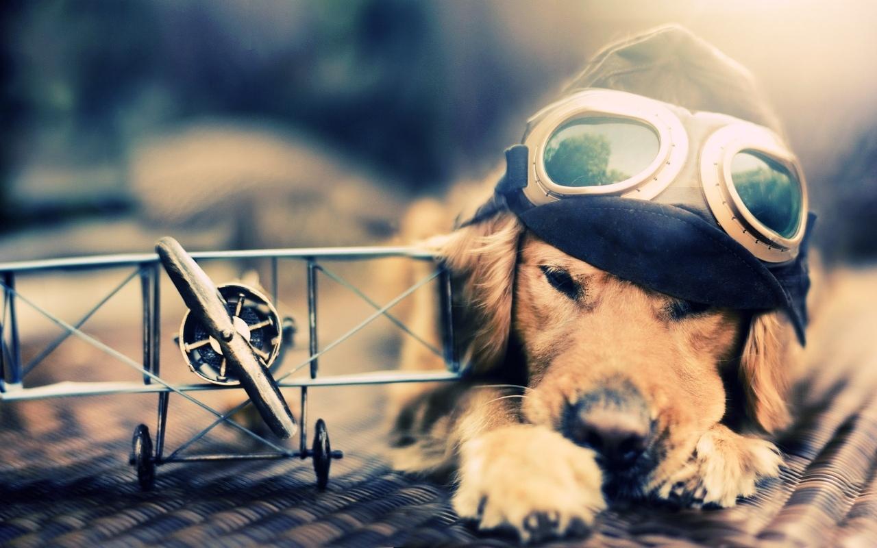 Uluslararası Pet, Hayvan Taşıma